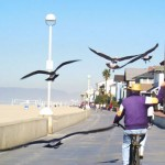 Birdman of Hermosa Beach, Ca.